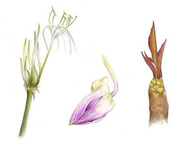 a_voyage_plantes
